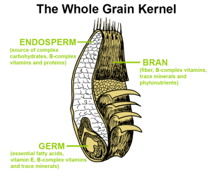 Components of a Whole Grain